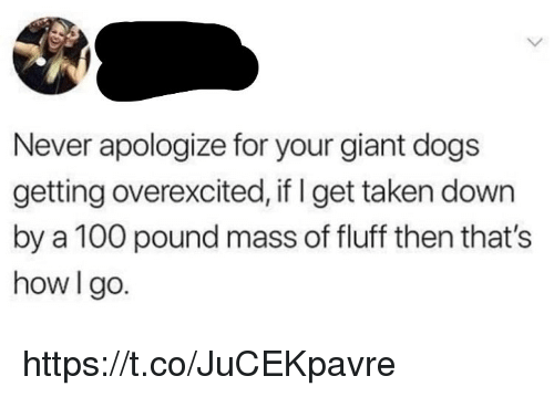 Anaconda, Dogs, and Memes: Never apologize for your giant dogs  getting overexcited, if I get taken down  by a 100 pound mass of fluff then that's  how I go. https://t.co/JuCEKpavre