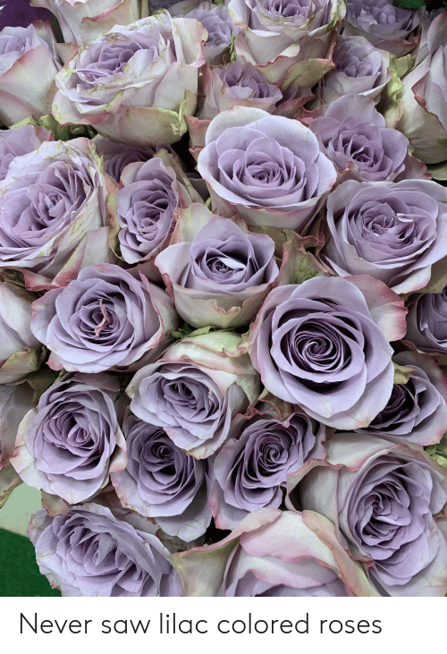 Saw, Never, and Roses: Never saw lilac colored roses