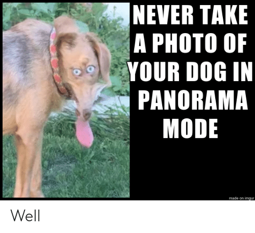 Imgur, Never, and Dog: NEVER TAKE  A PHOTO OF  YOUR DOG IN  PANORAMA  MODE  made on imgur Well
