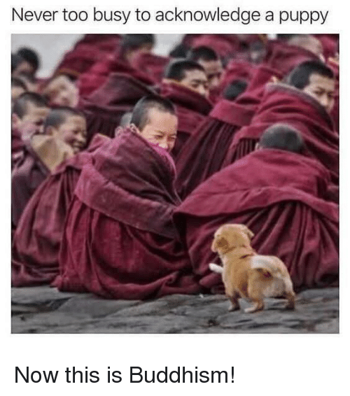 Puppy, Buddhism, and Never: Never too busy to acknowledge a puppy Now this is Buddhism!