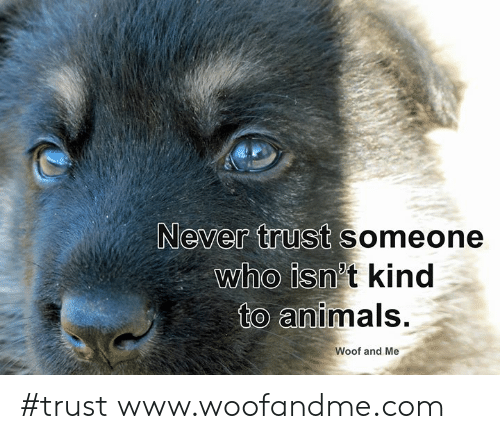 Animals, Memes, and Never: Never trust someone  who isn't kind  to animals.  Woof and Me #trust www.woofandme.com