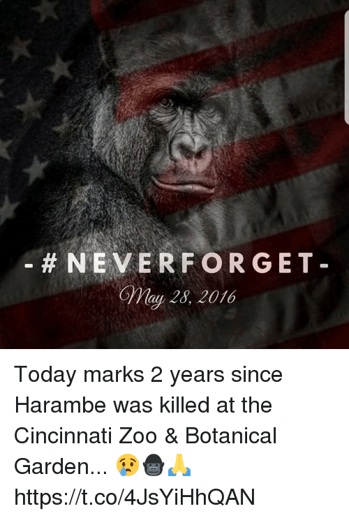 Today, Harambe, and Zoo:  #NEVERFORGET  May 28, 2016 Today marks 2 years since Harambe was killed at the Cincinnati Zoo & Botanical Garden... 😢🦍🙏 https://t.co/4JsYiHhQAN