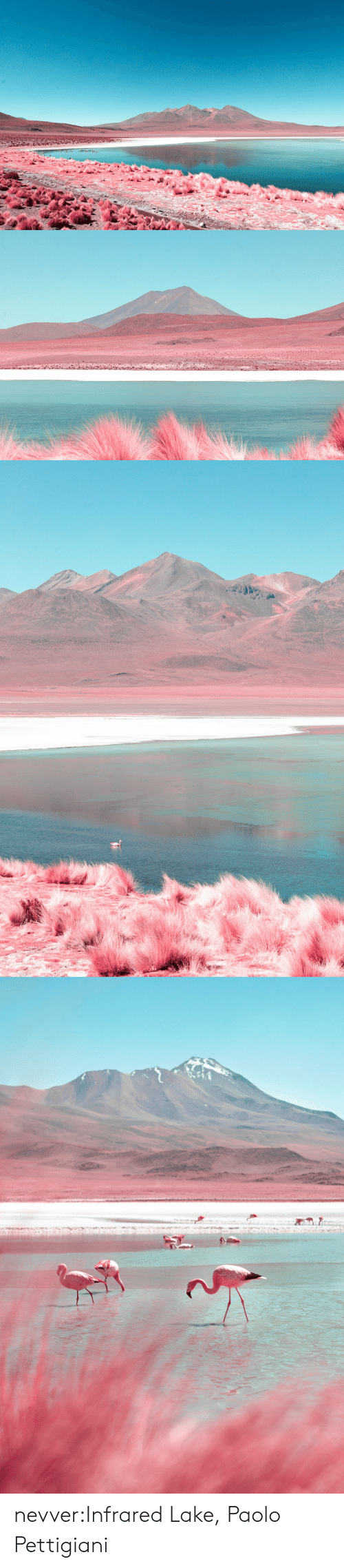 Tumblr, Blog, and Net: nevver:Infrared Lake, Paolo Pettigiani
