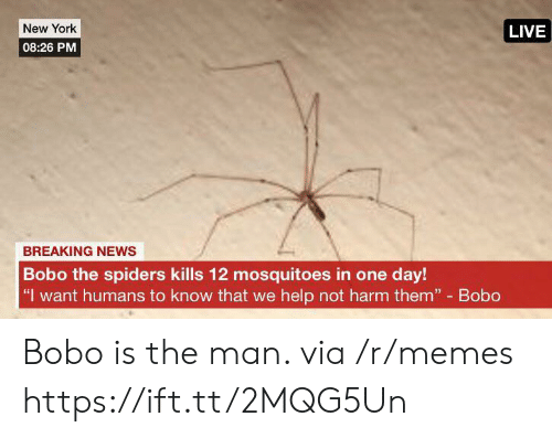 """Harm: New York  LIVE  08:26 PM  BREAKING NEWS  Bobo the spiders kills 12 mosquitoes in one day!  """"I want humans to know that we help not harm them"""" Bobo Bobo is the man. via /r/memes https://ift.tt/2MQG5Un"""