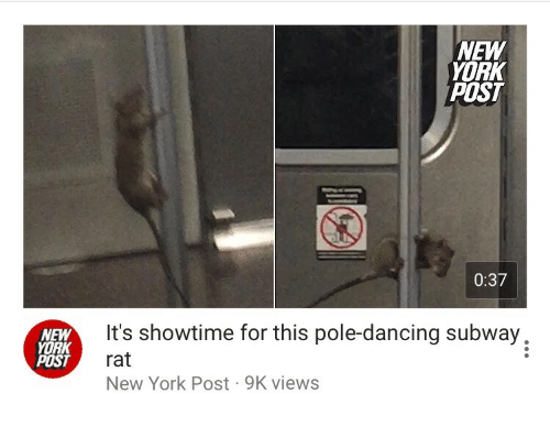 Dancing, New York, and New York Post: NEW  YORK  POST  0:37  NEW  YORK  POST  It's showtime for this pole-dancing subway,  rat  New York Post 9K views