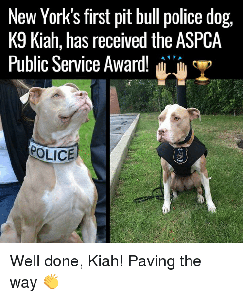 Aspca: New York's first pit bull police dog,  K9 Kiah, has received the ASPCA  Public Service Award!  T  POLICE  UNIT Well done, Kiah! Paving the way 👏