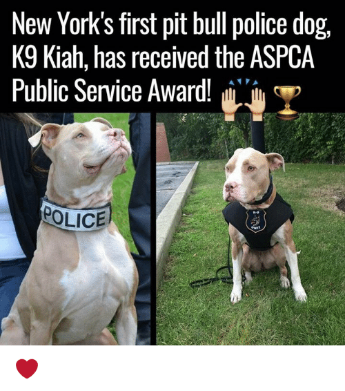 Aspca: New York's first pit bull police dog,  K9 Kiah, has received the ASPCA  Public Service Award!  H  POLICE  UNIT ❤️️