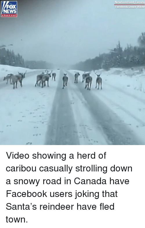 reindeer: Newfoundland, Canada  FOX  NEWS  channel Video showing a herd of caribou casually strolling down a snowy road in Canada have Facebook users joking that Santa's reindeer have fled town.