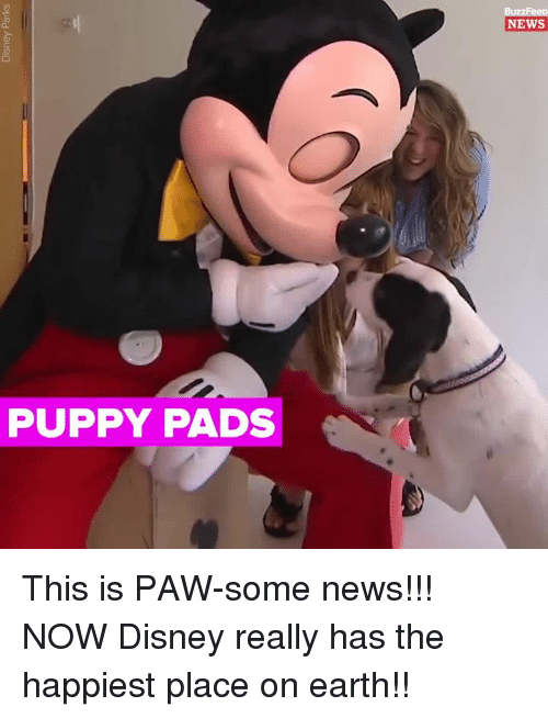 Disney, Memes, and News: NEWS  PUPPY PADS This is PAW-some news!!! NOW Disney really has the happiest place on earth!!