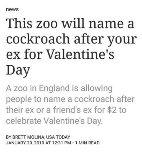 England, Friends, and News: news  This zoo will name a  cockroach after your  ex for Valentine's  Day  A zoo in England is allowing  people to name a cockroach after  their ex or a friend's ex for $2 to  celebrate Valentine's Day.  BY BRETT MOLINA, USA TODAY  JANUARY 29.2019 AT 12:31 PM 1 MIN READ