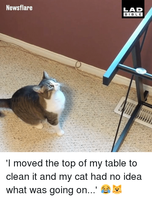 Dank, Bible, and 🤖: Newsflare  LAD  BIBLE 'I moved the top of my table to clean it and my cat had no idea what was going on...' 😂🐱