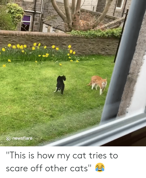 "Cats, Scare, and How: newsflare ""This is how my cat tries to scare off other cats"" 😂"