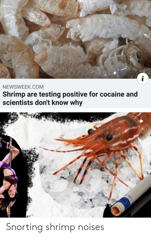 Snorting: NEWSWEEK.COM  Shrimp are testing positive for cocaine and  scientists don't know why Snorting shrimp noises