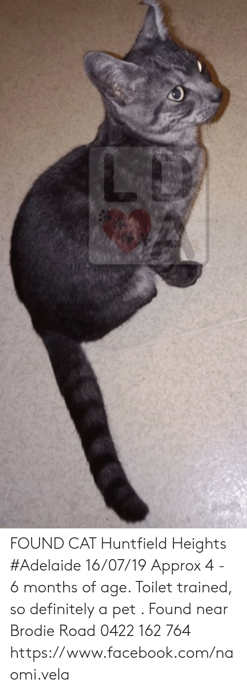Definitely, Facebook, and Memes: NG FOUND CAT Huntfield Heights #Adelaide 16/07/19 Approx 4 - 6 months of age. Toilet trained, so definitely a pet . Found near Brodie Road   0422 162 764 https://www.facebook.com/naomi.vela
