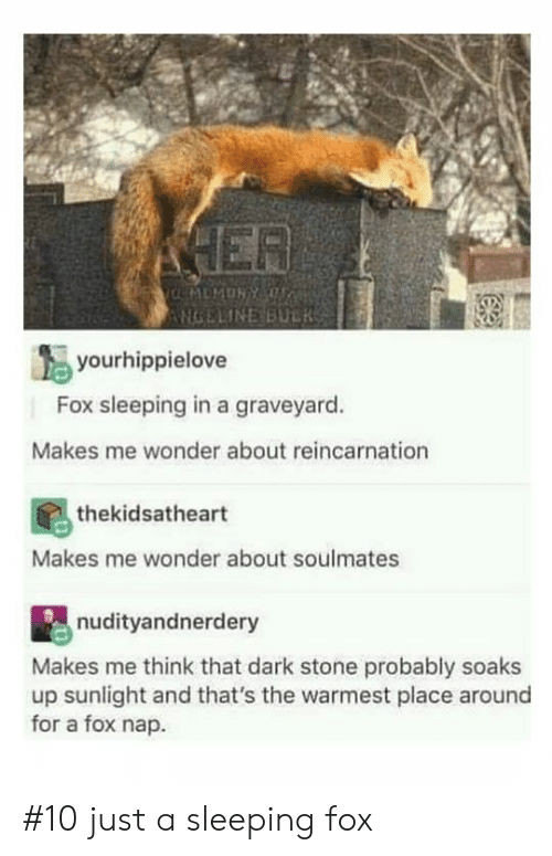 Sleeping, Reincarnation, and Wonder: NGELINEBULRSS  yourhippielove  Fox sleeping in a graveyard.  Makes me wonder about reincarnation  thekidsatheart  Makes me wonder about soulmates  nudityandnerdery  Makes me think that dark stone probably soaks  up sunlight and that's the warmest place around  for a fox nap #10 just a sleeping fox