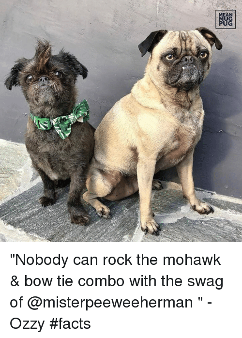 "Facts, Memes, and Swag: NGG ""Nobody can rock the mohawk & bow tie combo with the swag of @misterpeeweeherman "" -Ozzy #facts"