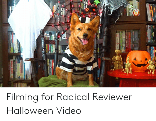 Halloween, Rogue, and Video: NHTAL  AD  MILK  PLAALA  AN  THE PYRATES  RORT ORO  PRICE  NI REAGAN  Interco  CH  NAOMI KLEIN  REAL BOYS  ROGUE STATE Filming for Radical Reviewer Halloween Video