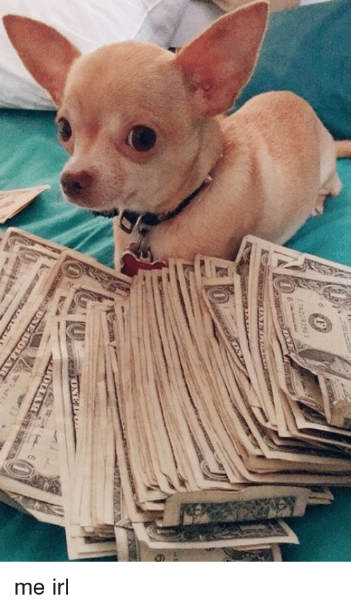 Money Dog: ni  6  OLLAR  to me irl