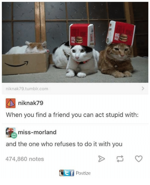 Memes, Tumblr, and 🤖: niknak79.tumblr.com  niknak79  When you find a friend you can act stupid with:  miss-morland  and the one who refuses to do it with you  474,860 notes  E f  Postize