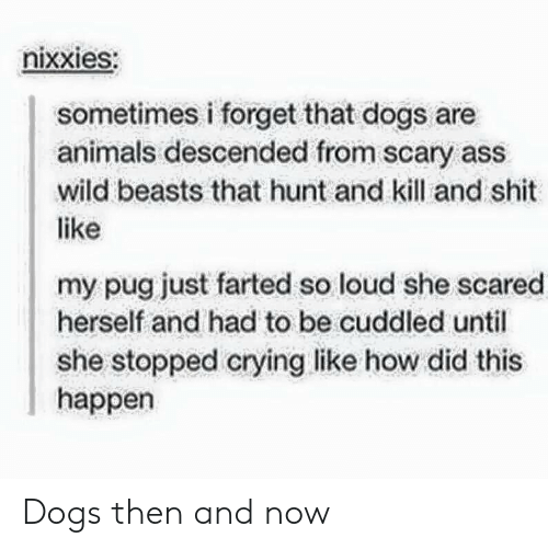 Animals, Ass, and Crying: nixxieS:  sometimes i forget that dogs are  animals descended from scary ass  wild beasts that hunt and kill and shit  like  my pug just farted so loud she scared  herself and had to be cuddled until  she stopped crying like how did this  happen Dogs then and now