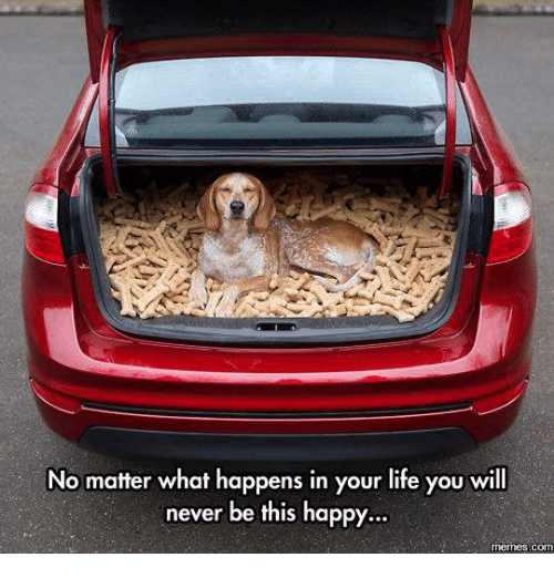 happy meme: No matter what happens in your life you will  never be this happy.  memes com