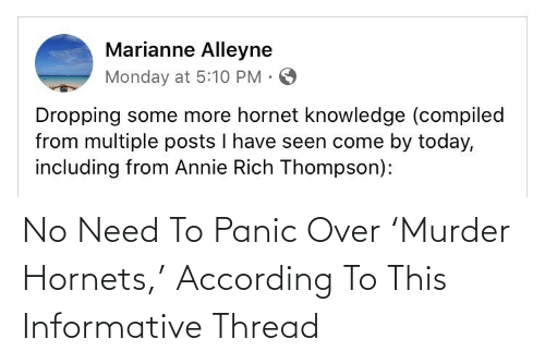 According: No Need To Panic Over 'Murder Hornets,' According To This Informative Thread