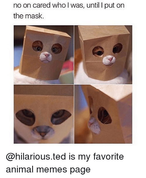 Memes, Ted, and The Mask: no on cared who I was, until I put on  the mask. @hilarious.ted is my favorite animal memes page