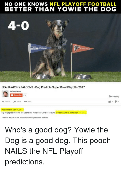 NFL playoffs: NO ONE KNOWS NFL PLAYOFF FOOTBALL  BETTER THAN YOWIE THE DOG  4-0  FALED  SEAHAWKS vs FALCONS Dog Predicts Super Bowl Playoffs 2017  Jeffrey Smee  Subscribe  314  96 views  Add to Share More  Published on Jan 10, 2017  My dog's prediction for the Seahawks vs Falcons Divisional round football game to be held on 1/14/17.  Yowie is 4 for 4 in her Wildcard Round prediction videos! Who's a good dog? Yowie the Dog is a good dog. This pooch NAILS the NFL Playoff predictions.