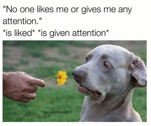 "One, Likes, and Attention: ""No one likes me or gives me any  attention.""  *is liked"" *is given attention*  @dontgetpupset"