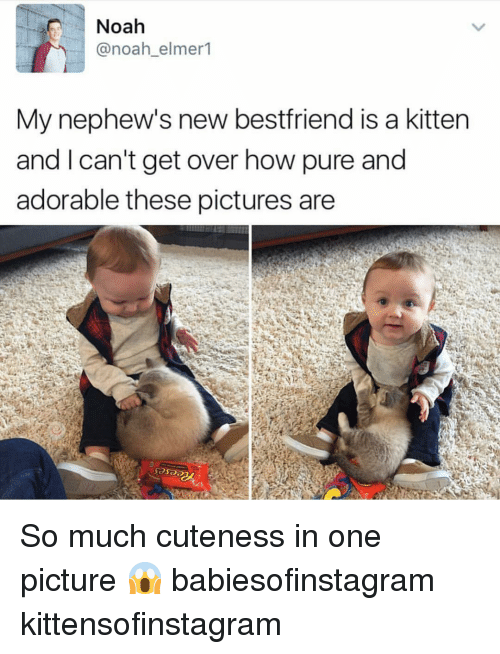 Memes, Noah, and Pictures: Noah  @noah_elmer1  My nephew's new bestfriend is a kitten  and I can't get over how pure and  adorable these pictures are So much cuteness in one picture 😱 babiesofinstagram kittensofinstagram