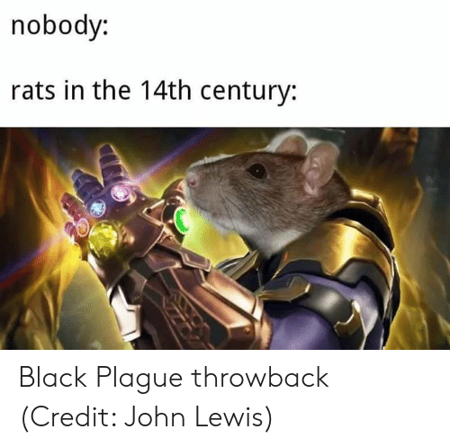 Memes, Black, and 🤖: noboay:  rats in the 14th century: Black Plague throwback   (Credit: John Lewis)