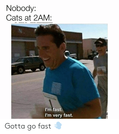 Cats, Memes, and 🤖: Nobody:  Cats at 2AM:  I'm fast.  I'm very fast. Gotta go fast 💨