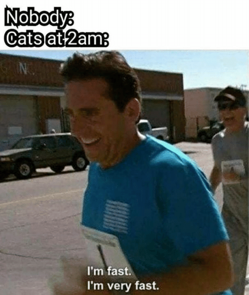 Fast, 2am, and Nobody: Nobody  Catsat 2am  I'm fast.  I'm very fast.