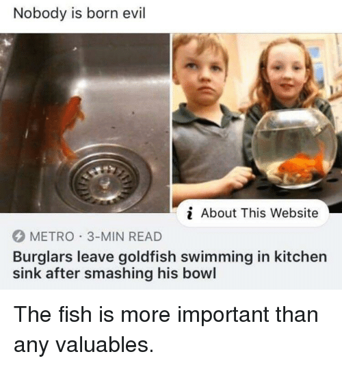 Goldfish, Fish, and Metro: Nobody is born evil  i About This Website  METRO 3-MIN READ  Burglars leave goldfish swimming in kitchen  sink after smashing his bowl
