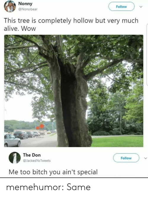 Alive, Bitch, and Tumblr: Nonny  @Nonsibear  Follow  This tree is completely hollow but very much  alive. Wow  The Don  @JackedYoTweets  Follow  Me too bitch you ain't special memehumor:  Same