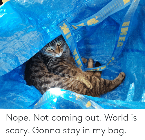 Stay In: Nope. Not coming out. World is scary. Gonna stay in my bag.
