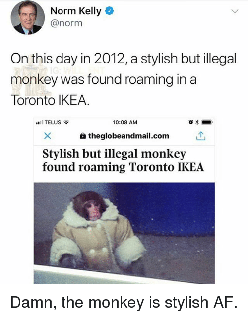 telus: Norm Kelly  @norm  On this day in 2012,a stylish but illegal  monkey was found roaming in a  Toronto IKEA.  11 TELUS  10:08 AM  a theglobeandmail.com  Stylish but illegal monkey  found roaming Toronto IKEA Damn, the monkey is stylish AF.