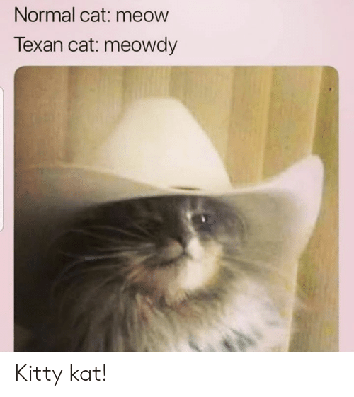 Dank, Texan, and 🤖: Normal cat: meow  Texan cat: meowdy Kitty kat!