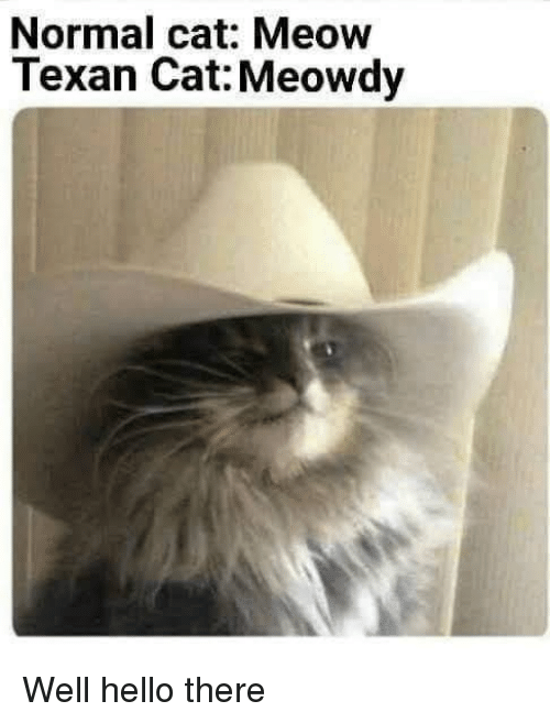 Hello, Texan, and Cat: Normal cat: Meow  Texan Cat: Meowdy Well hello there