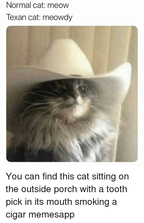 cigar: Normal cat: meow  Texan cat: meowdy You can find this cat sitting on the outside porch with a tooth pick in its mouth smoking a cigar memesapp