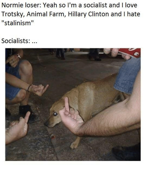 Animals, Anime, and Hillary Clinton: Normie loser: Yeah so I'm a socialist and I love  Trotsky, Animal Farm, Hillary Clinton and I hate  Stalinism  Socialists