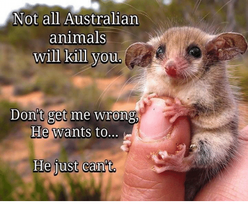 Animals, Dank, and Australian: Not all Australian  animals  will kill you  Don't get me wrong  He wants to...  He just can't.