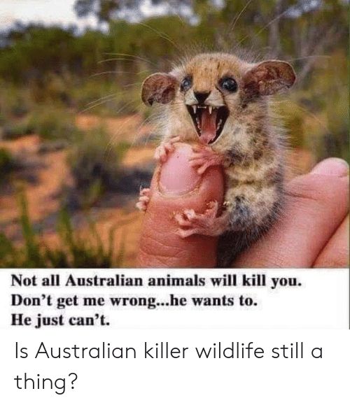 Animals, Australian, and Will: Not all Australian animals will kill you  Don't get me wrong...he wants to  He just can't. Is Australian killer wildlife still a thing?