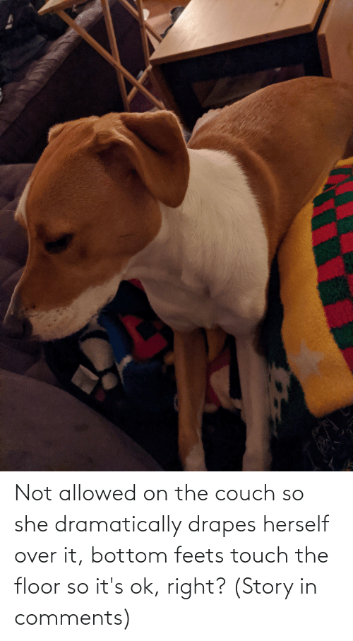 Herself: Not allowed on the couch so she dramatically drapes herself over it, bottom feets touch the floor so it's ok, right? (Story in comments)