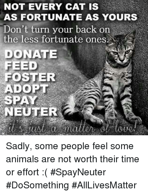 All Lives Matter, Animals, and Memes: NOT EVERY CAT IS  AS FORTUNATE AS YOURS  Don't turn your back on  the less fortunate ones.  DONATE  FEED  FOSTER  ADOPT  SPAY  NEUTER Sadly, some people feel some animals are not worth their time or effort :( #SpayNeuter #DoSomething #AllLivesMatter