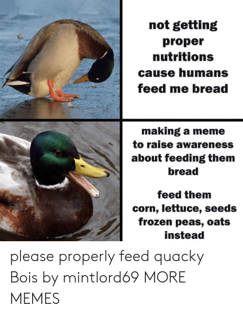 Dank, Frozen, and Meme: not getting  proper  nutritions  cause humans  feed me bread  making a meme  to raise awareness  about feeding them  bread  feed them  corn, lettuce, seeds  frozen peas, oats  instead please properly feed quacky Bois​ by mintlord69 MORE MEMES