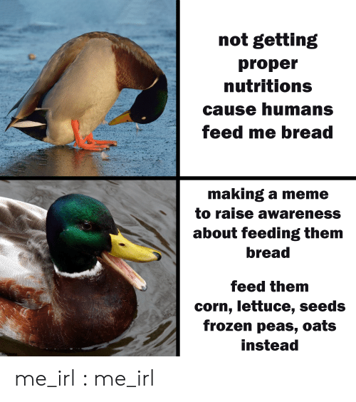 corn: not getting  proper  nutritions  cause humans  feed me bread  making a meme  to raise awareness  about feeding them  bread  feed them  corn, lettuce, seeds  frozen peas, oats  instead  @der.leong me_irl : me_irl