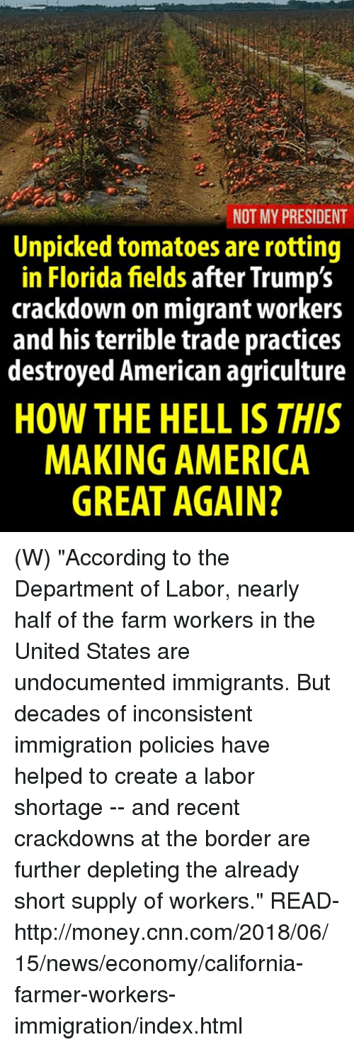 "America, cnn.com, and Money: NOT MY PRESIDENT  Unpicked tomatoes are rotting  in Florida fields after Trump's  crackdown on migrant workers  and his terrible trade practices  destroyed American agriculture  HOW THE HELL IS THIS  MAKING AMERICA  GREAT AGAIN? (W) ""According to the Department of Labor, nearly half of the farm workers in the United States are undocumented immigrants. But decades of inconsistent immigration policies have helped to create a labor shortage -- and recent crackdowns at the border are further depleting the already short supply of workers.""  READ-  http://money.cnn.com/2018/06/15/news/economy/california-farmer-workers-immigration/index.html"