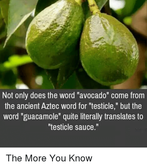 """Guacamole, Memes, and The More You Know: Not only does the word """"avocado"""" come from  the ancient Aztec word for """"testicle,"""" but the  word """"guacamole"""" quite literally translates to  testicle sauce."""" The More You Know"""