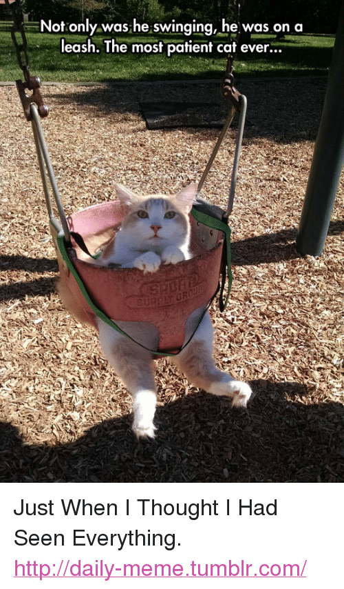 """Meme, Tumblr, and Http: Not only was he swinging, he was on a  leash. The most patient cat ever...  3u <p>Just When I Thought I Had Seen Everything.<br/><a href=""""http://daily-meme.tumblr.com""""><span style=""""color: #0000cd;""""><a href=""""http://daily-meme.tumblr.com/"""">http://daily-meme.tumblr.com/</a></span></a></p>"""